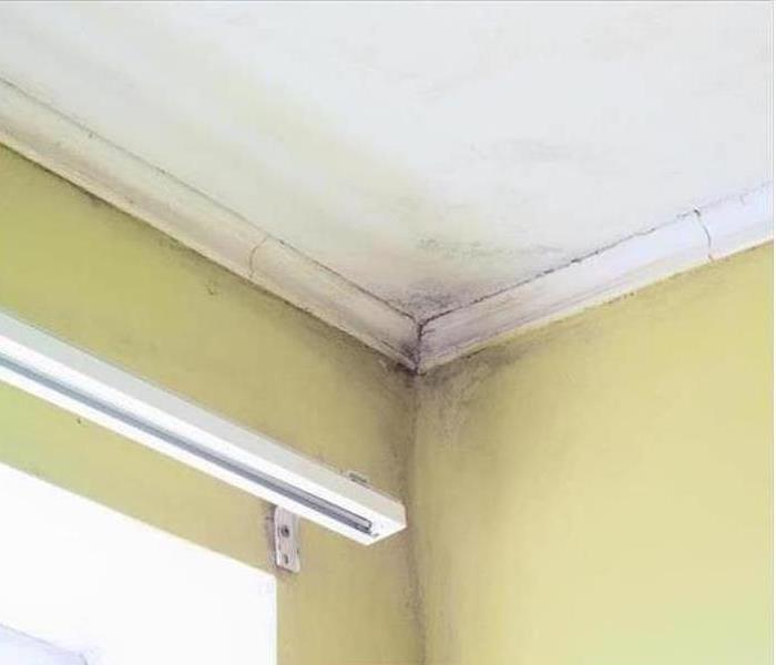 Mold Damage – Fort Collins Ceiling