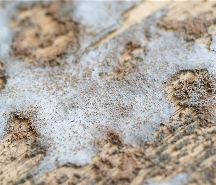 Mold Remediation Longmont Mold Damage - How Ceiling Fans Can Protect Against Mold Damage