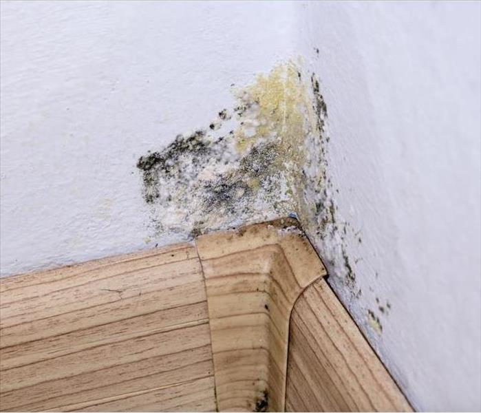 Mold Remediation Blasting Away Hidden Mold Damage in Your Fort Collins Residence