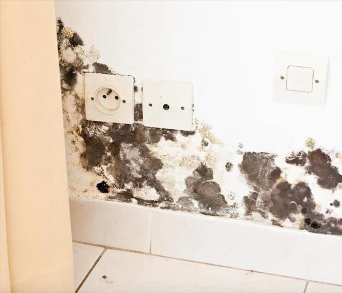 Mold Remediation SERVPRO Has the Equipment to Assess Mold Damage in Your Fort Collins Home