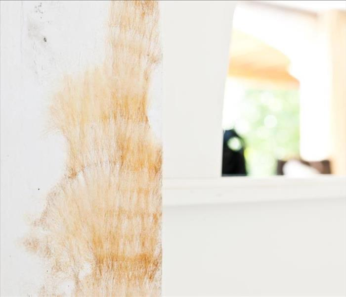 Mold Remediation PPE Is Important When Fighting Mold Damage in Fort Collins