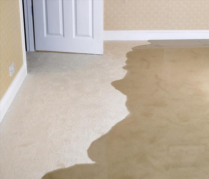 Water Damage Understanding the Need for Professional Water Removal Services in Your Fort Collins Residence