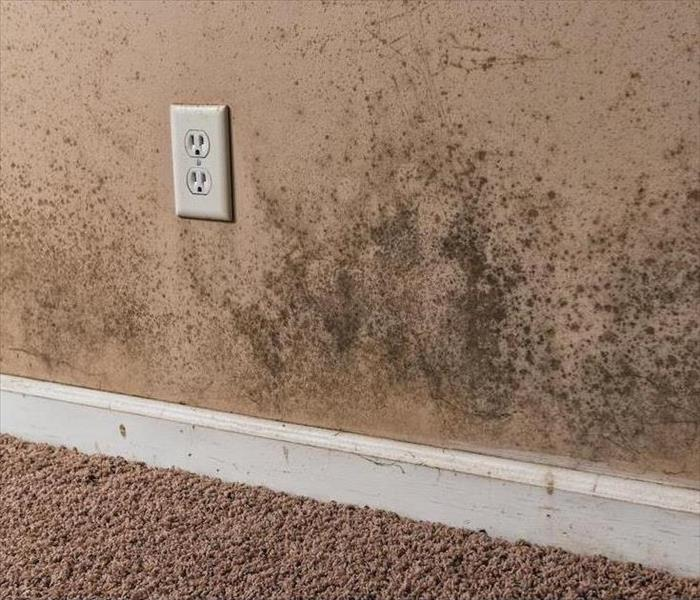 Mold Remediation What to Expect During Professional Mold Damage Remediation in Fort Collins